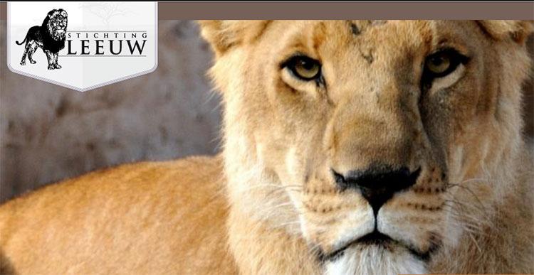 St Leeuw  Tijgerworkshop  Adopteer een dier Word Donateur
