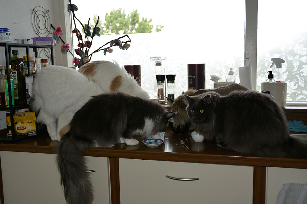 Kattenmelk in de keuken
