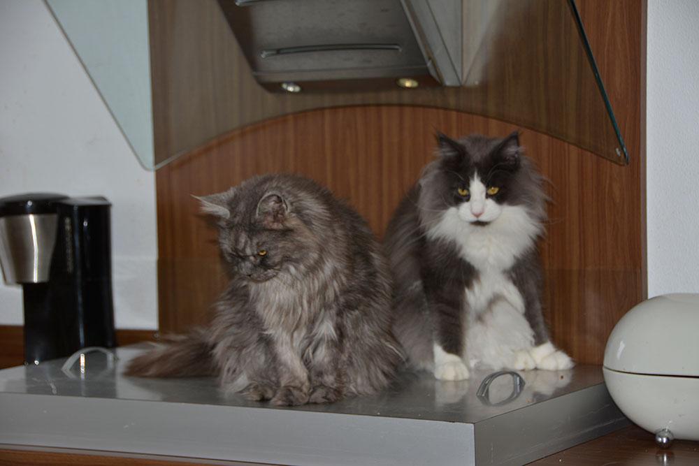 Myrna en Loki